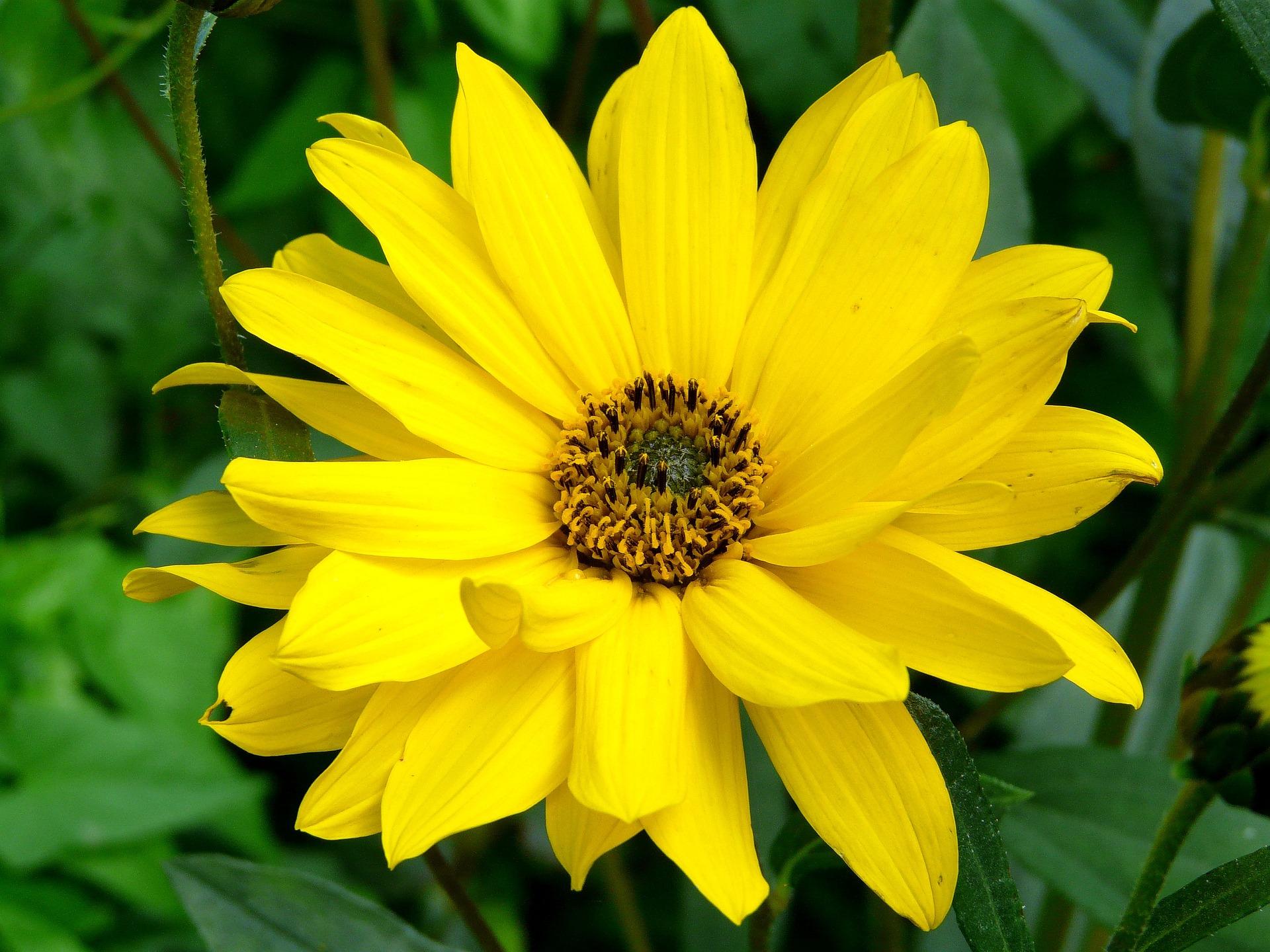 Arnika Blüten 20g